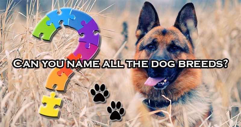 Can you name all the dog breeds?