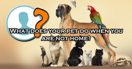 What does your pet do when you are not home?