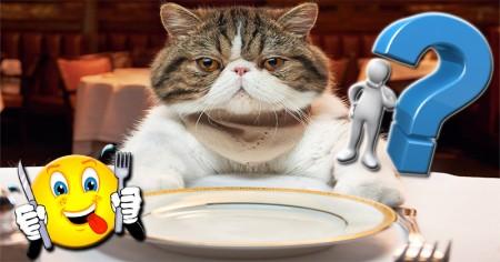 Em que você se transforma quando está com fome?